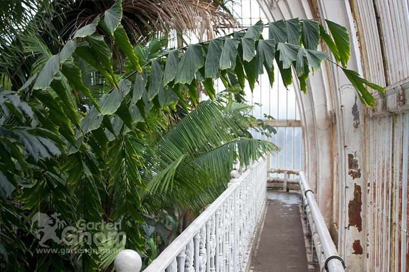Dachgalerie im großen Palmenhaus in den Kew Gardens in London.