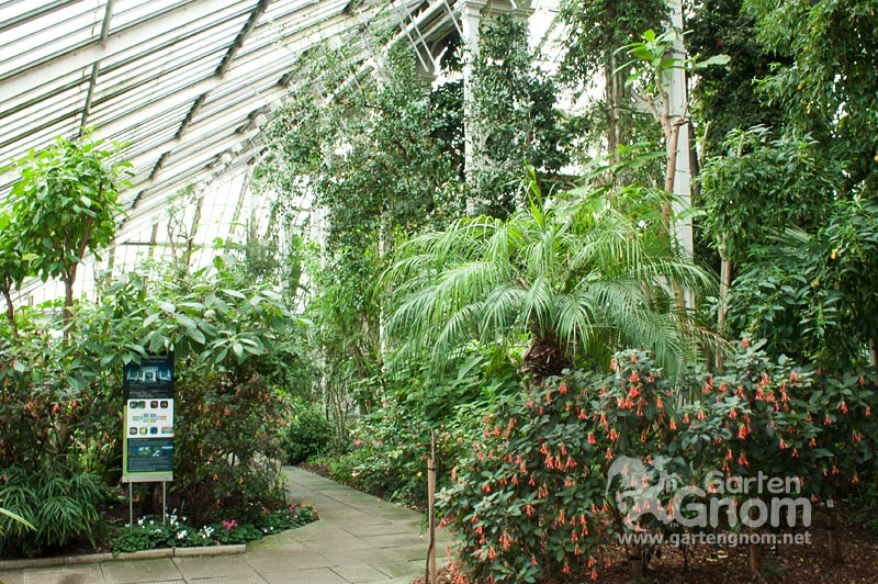 Im Temperate House in den Kew Gardens in London.