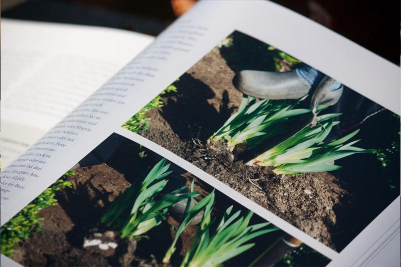 """Step-by-Step Bilder-Erklärung im Buch """"Stauden im Garten"""""""