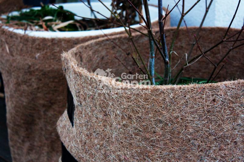 pflanzen im k ltestress frostsch den im garten. Black Bedroom Furniture Sets. Home Design Ideas