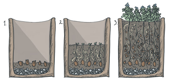 Kartoffeln im Pflanzsack anhäufeln