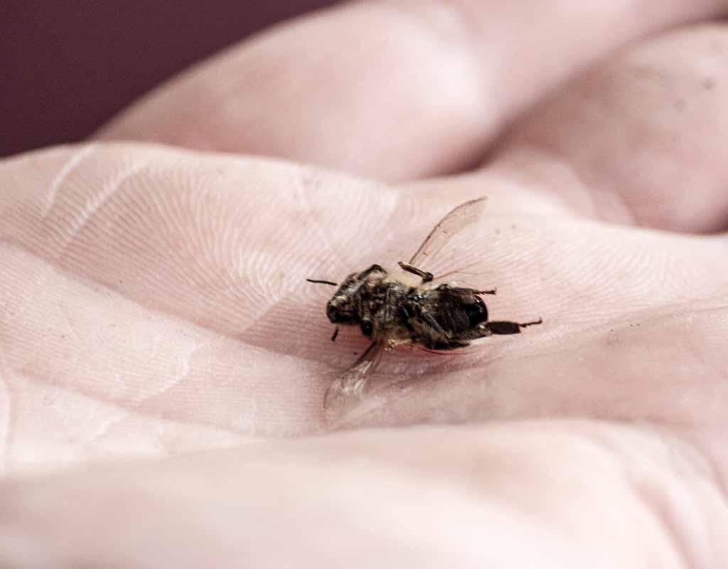 Bienensterben in Österreich