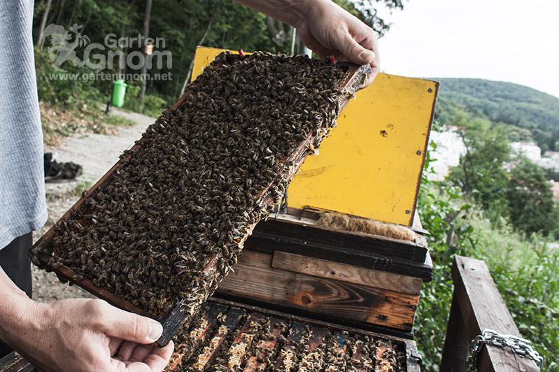 Emsiges Bienentreiben im Stock