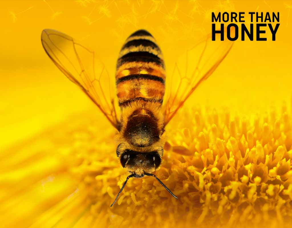 "Filmrezension: ""More Than Honey"""
