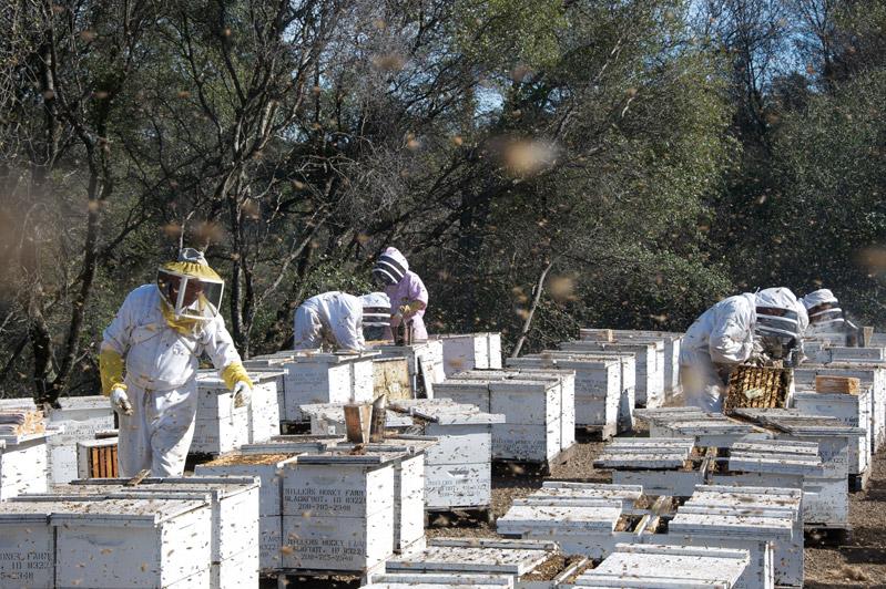 More Than Honey - Imker in den USA