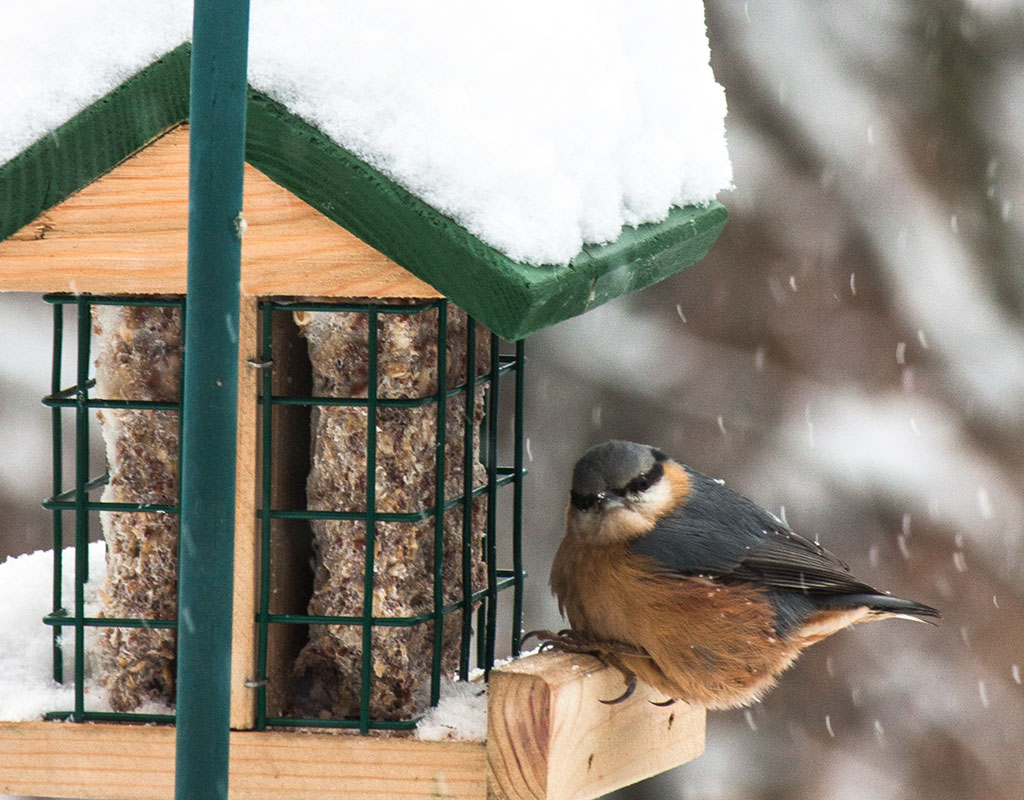 Stunde der Wintervögel 2013
