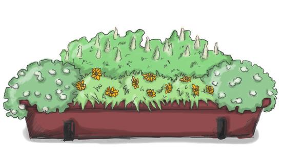 Balkonkasten mit Duftsteinrich weiß (Honigduft), Ringelblume, Duftresede (Veilchenduft)