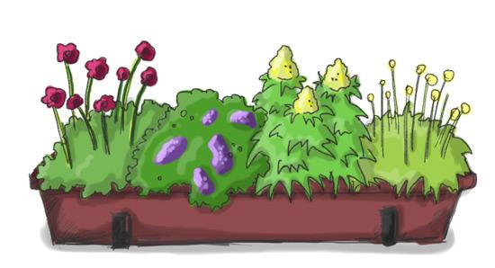 Balkonkasten mit Schokoladenblume, Vanilleblume (Vorsicht giftig), Mohnbrötchenblume, Gummibärchenblume