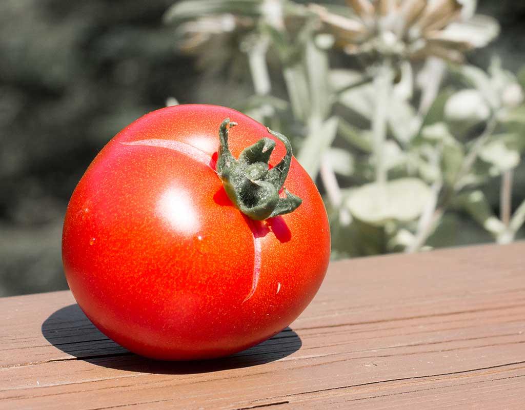 Warum platzen meine Paradeiser (Tomaten) auf?