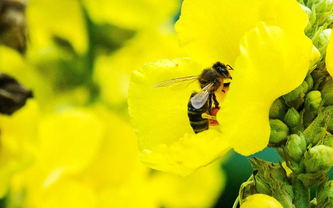 Der Bienenkalender der Bienenweiden