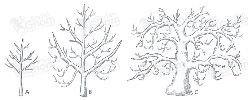 Entwicklungsperioden von Obstbäumen.